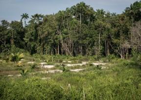 The edge of the jungle