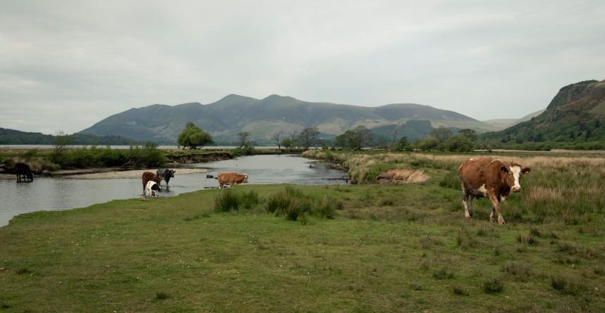 lakes final-1030646